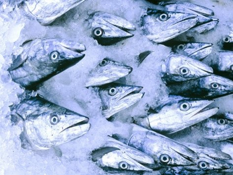 The top fish and seafood recipes happyshoppinglife 39 s blog for Does frozen fish go bad